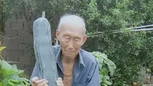 没见过这么长的瓜,老大爷真是种瓜高手,希望长命百岁!