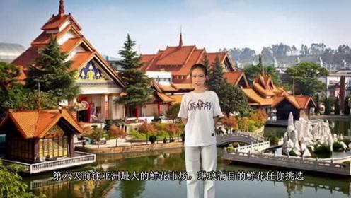 云南六日游双飞3000多,云南旅游报团大概多少钱,云南旅游攻略#旅行vlog#