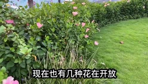深圳罗湖又一个高颜值公园诞生,是个旅游的好地方,来看看
