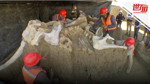 墨西哥新修机场发现超200具猛犸象遗骸 或为世界上最大规模