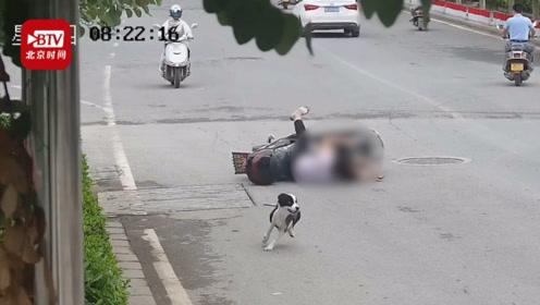 未拴绳宠物狗撞翻电动车两人受伤交警:狗主人全责!