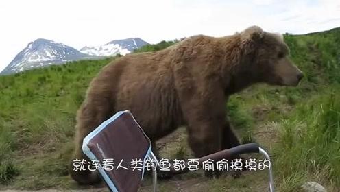 棕熊一推开门,却发现男子躺在地上,棕熊:咋的还想碰瓷儿啊!