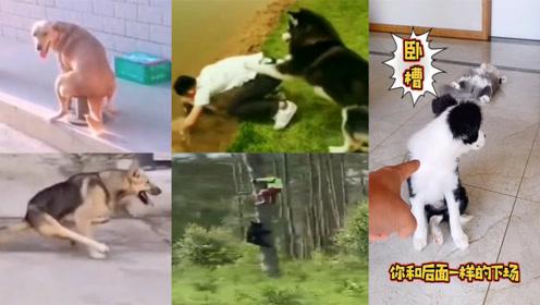 2020热门搞笑视频精选,动物们的那些骚操作