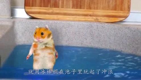 搞笑动物:当猫咪遇上洗澡鸭,会碰撞出啥画面