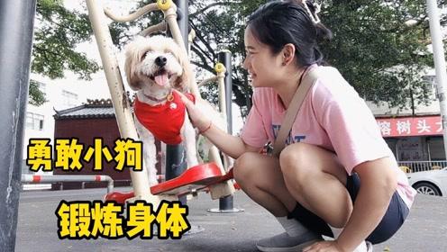 勇敢小狗去锻炼身体,狗狗对体育器材又爱又恨
