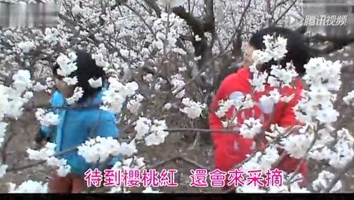 西乡樱桃花开等你来 花儿开在三月