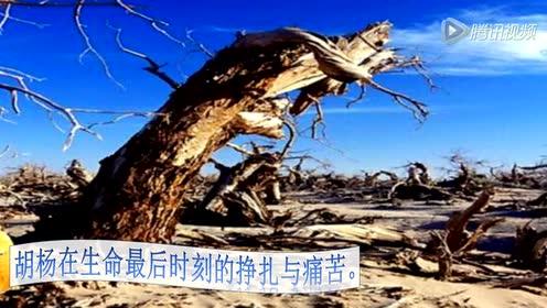 沪教版七年级语文上册29 罗布泊,消逝的仙湖