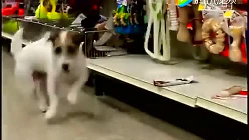 这是一只万能的狗狗啊 哈哈!