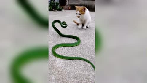 猫科动物的反应速度对蛇来说无能为力 搞笑搞笑