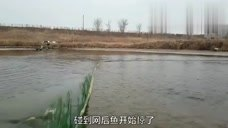 农村大叔一网打120多斤鲤鱼,太多了只能用大编织袋装鱼!
