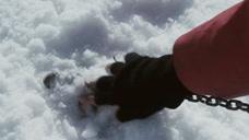8只狗狗被主人锁在南极,180多天回去看结果,令人意外!