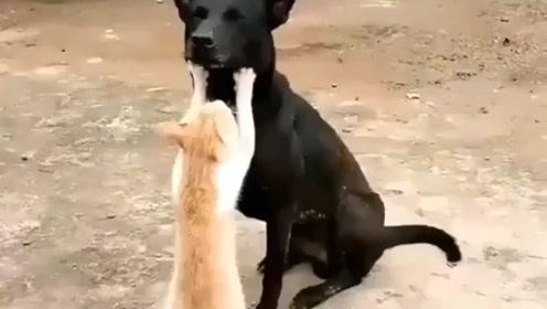 搞笑动物短视频