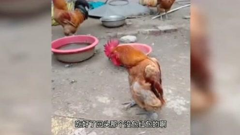 搞笑视频: 动物迷惑行为大赏。