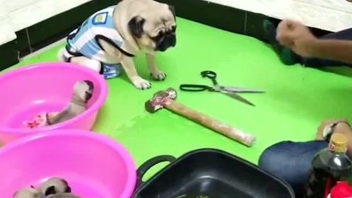 主人玩游戏被狗狗逼急,气的吃黄瓜蘸酱油,狗