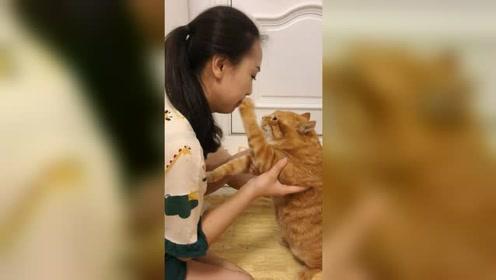 猫猫你就天天欺负我啊