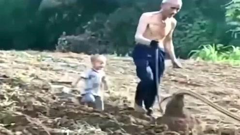 儿子被送到农村老家,**发来视频,给我笑的肚子疼!