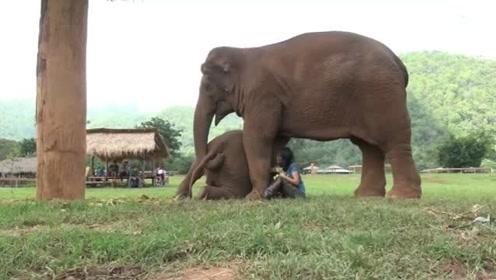 好听话的大象