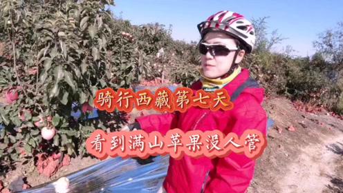 骑行西藏第七天终于出辽宁了,路上看到满山的果园,都没有人看管