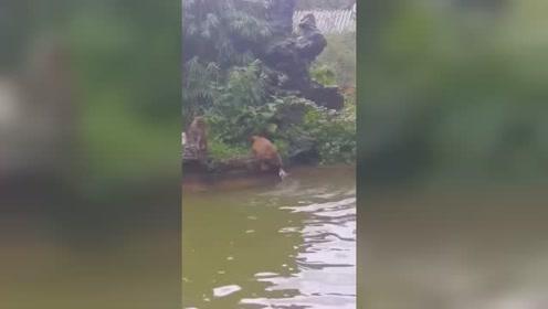 #我要上热门#拍视频的吼一嗓子,一会猴崽被傻妈