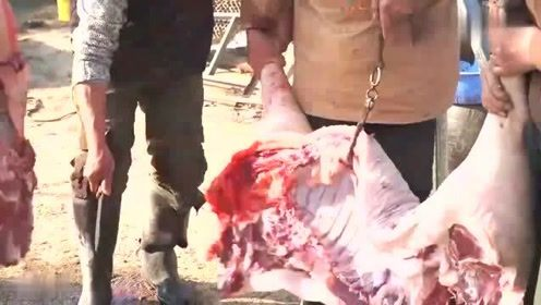 阿远到养猪场买黑猪肉,去这趟花了300多,黑猪肉炒着吃就是香
