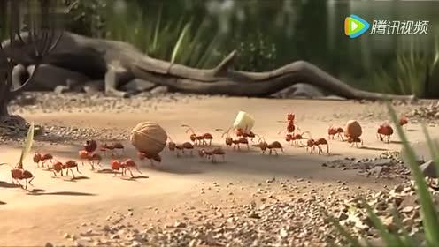 搞笑动画短片 动物团队合作的重要性