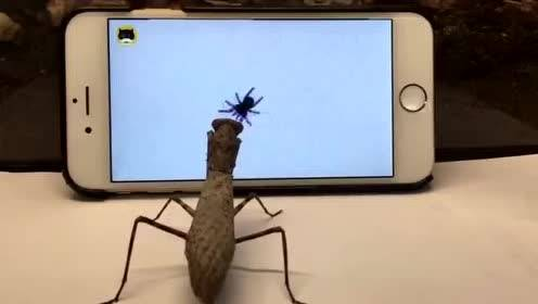 动物吃IPAD里的虫子,太搞笑了