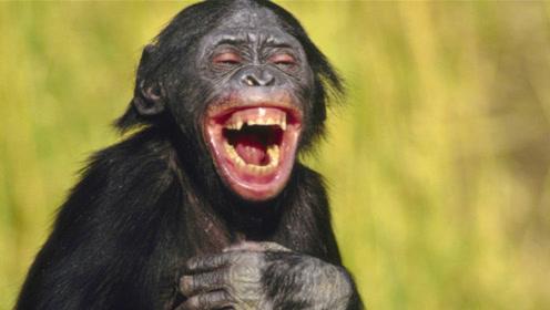 动物们的搞笑瞬间,有能耐你别笑!