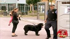 街头恶搞:被通缉的遛狗男神奇换装躲过一劫