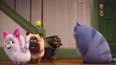 《爱宠大机密2》新角色预告 软萌麦克被一只鸡欺负 遭众狗鄙视!