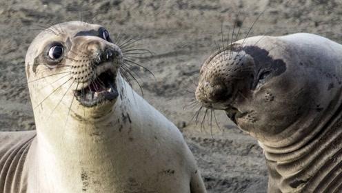 沙雕动物搞笑配音:小鱼学爬墙,还给自己洗脑