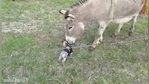 搞笑动物:小家伙,你这是迷路了吧?