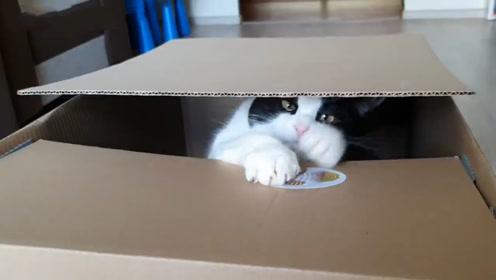 真猫咪存钱罐?看猫咪一脸认真守钱的样子,真