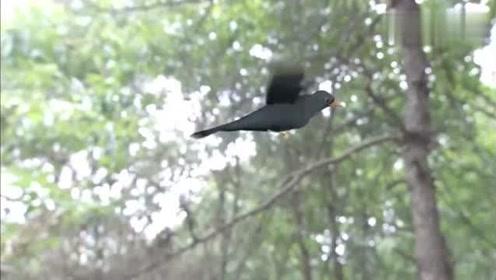 小鸟突然开口说话,姑娘竟能听懂鸟语,居然是故人