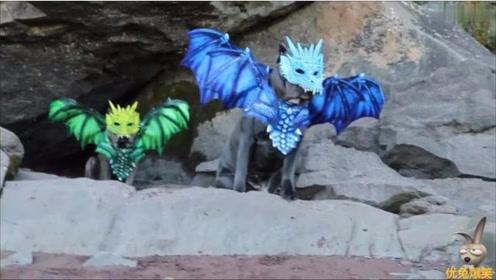 万圣节宠物狗的装扮,国外搞笑,主人们很用心