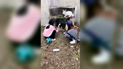 这姑娘带着妹妹捉鸡撵鸭恶搞全家,爹妈太不容