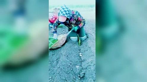 真实的农村生活,看了这个视频你还会浪费粮食吗?