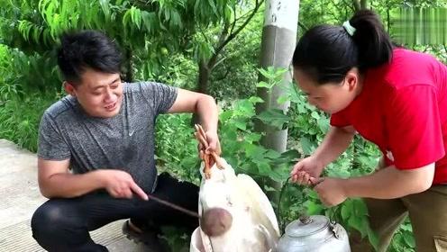 胖妹120买10斤大鹅,铁锅一炖,和表哥边吃边喝,老公这啥表情?