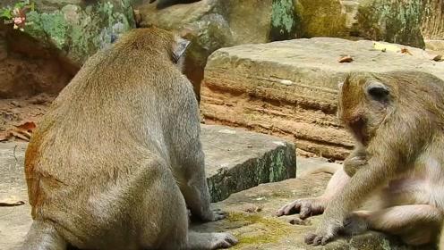 吉莉儿粘着猴王,暴躁的猴王一把推开吉莉儿,吉莉儿大叫
