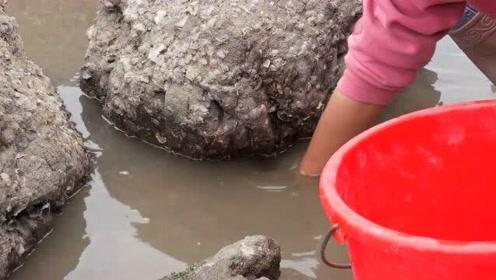 小章赶海发现搁浅海鳗,石缝里很多八爪鱼都捡不完啦!你想来吗?