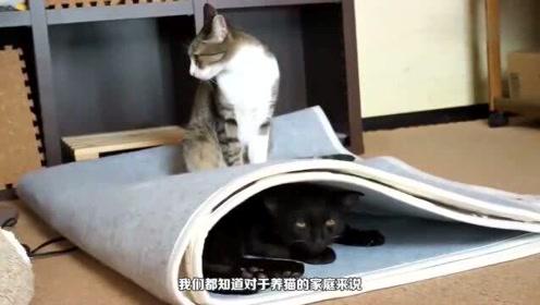 搞笑动物:自从买了玩具恐龙回家,猫咪走路就