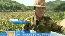 建宁 订单种植甜玉米 农民增收有保障