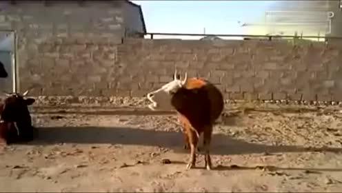 搞笑动物配音合集—迁安大玄