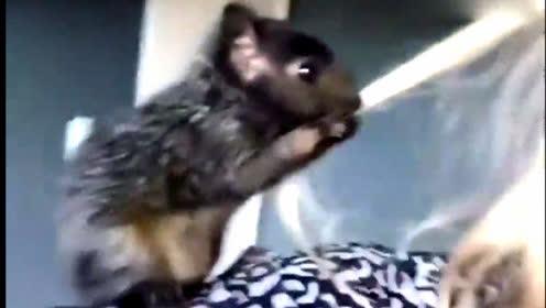 松鼠逗美女真是太搞笑了!