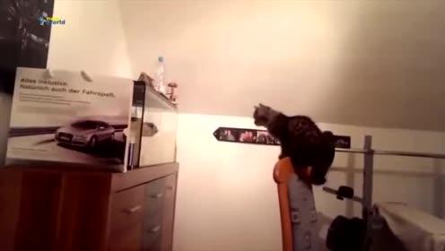 最搞笑有趣的动物跳跃失败