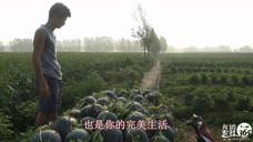 农村小伙 带你体验最真实的农村生活 鸡鸣破晓而起披星戴月而归