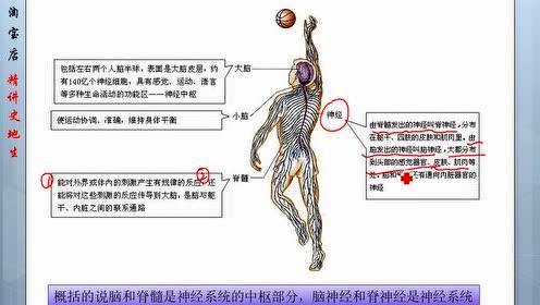 七年级生物下册第六章 人体生命活动的调节2.神经系统的组成