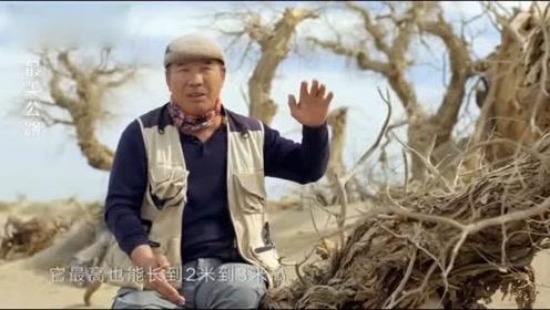 树林老头系列视频影片_沙漠有片怪树林,还有个怪老头,活着千年不死,死后千年不倒!
