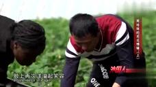 洋媳妇嫁到中国农村,却因为不能跳舞打退堂鼓,丈夫的做法好赞!