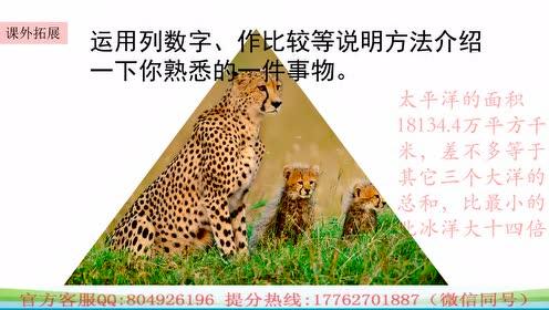 五年级语文上册7  什么比猎豹的速度更快