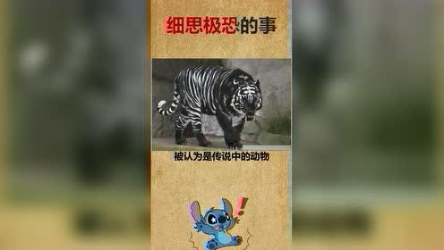 热门小视频:世界上最罕见的老虎。
